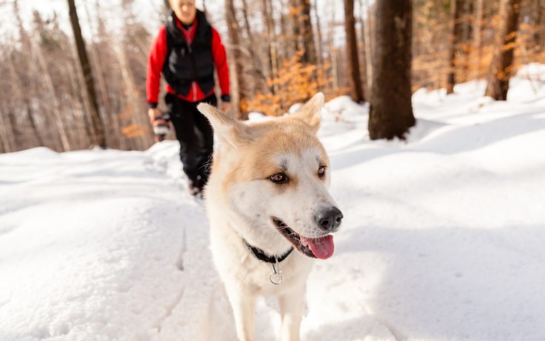 Best Places to Take Your Dog in the Winter